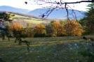 Manoir d´Ajas, Exteriores bosque /environs