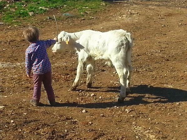 le contact des enfants avec les animaux 1